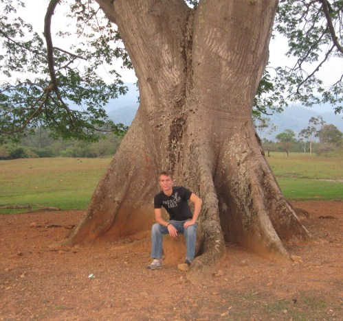 Jacob and a tree